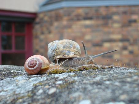 Free Stock Photo of Snail family