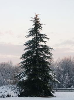 Free Stock Photo of Trees covered in snow
