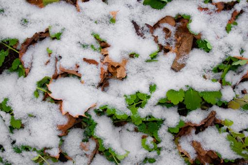 Free Stock Photo of first winter snow