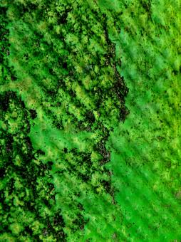 Free Stock Photo of Green Gunge Texture