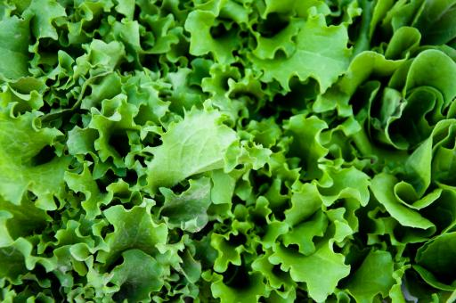Free Stock Photo of Green salad lettuce