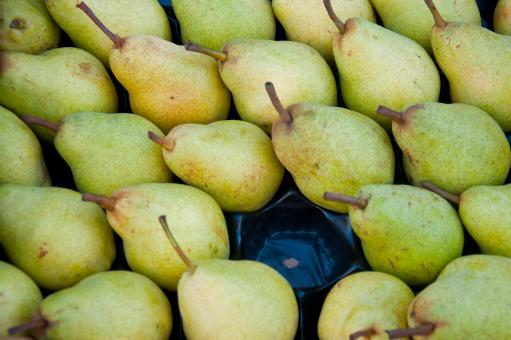 Free Stock Photo of Green pears