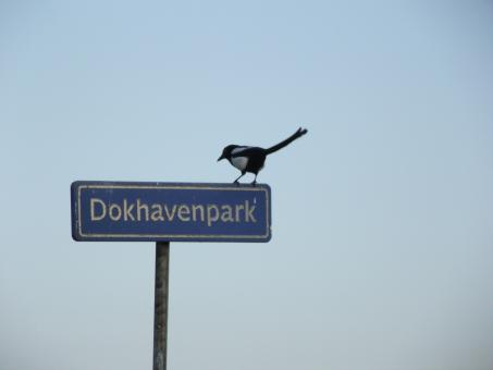 Free Stock Photo of Bird on road sign