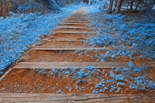 Free Stock Photo of Blue Forest Trail - HDR
