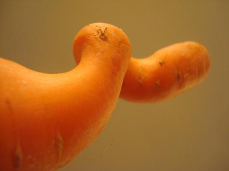 Free Stock Photo of Swirling carrot