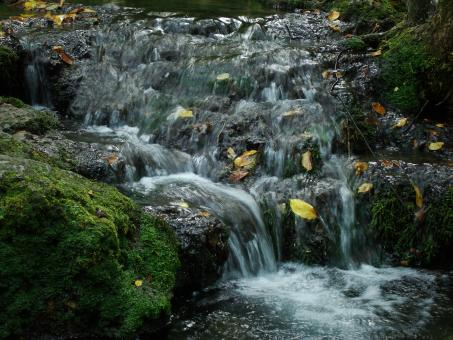 Free Stock Photo of Mountain creek waterfall