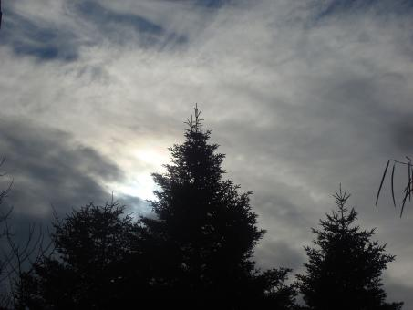 Free Stock Photo of A fir tree, sky and clouds