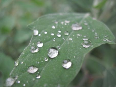 Free Stock Photo of Rain drops on a green leaf