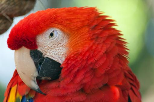 Free Stock Photo of Macaw