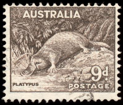 Free Stock Photo of Brown Platypus Stamp