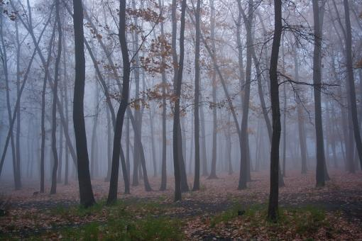 Free Stock Photo of trees and fog