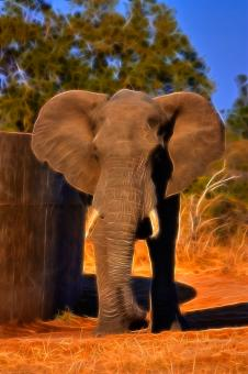 Free Stock Photo of Safari Elephant Abstract