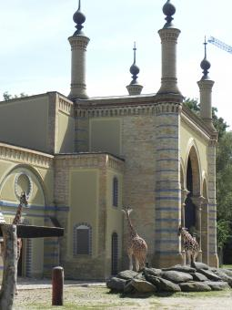 Free Stock Photo of Berlin Zoo - Giraffes