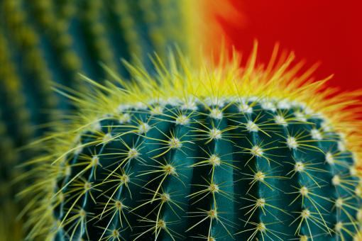 Free Stock Photo of Cactus Halo