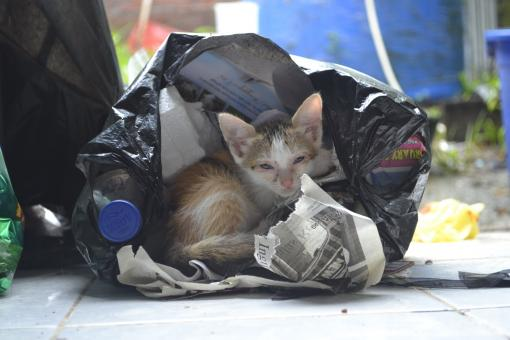 Free Stock Photo of Kitten in a plastic bag