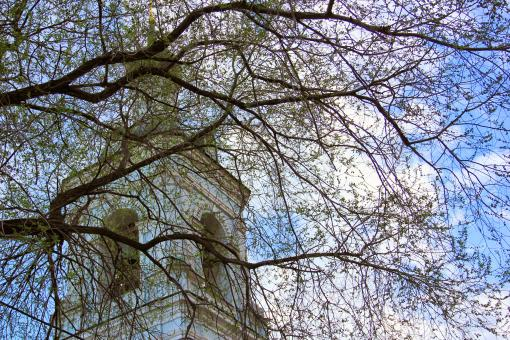 Free Stock Photo of Cathedral and branches