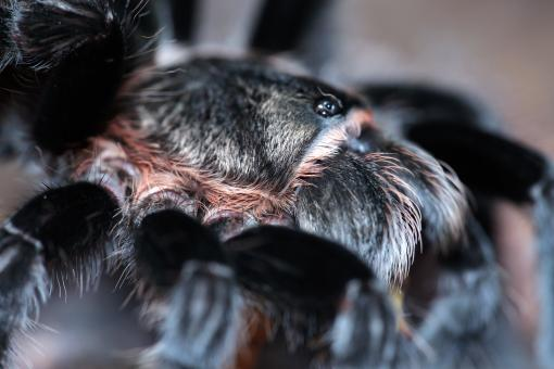 Free Stock Photo of Hairy Spider Close-up