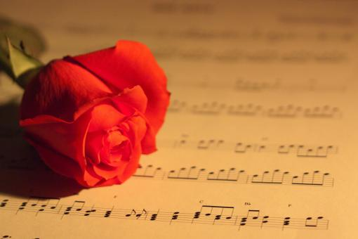 Free Stock Photo of Rose and Music