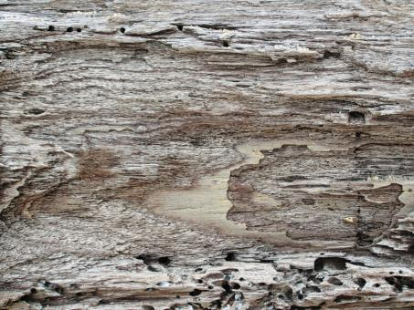 Free Stock Photo of Driftwood Background