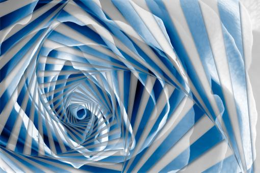 Free Stock Photo of Blue Rose Spiral