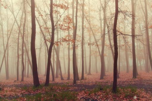 Free Stock Photo of Forest fog