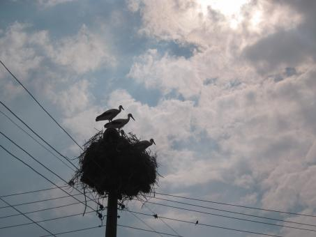 Free Stock Photo of Stork nest
