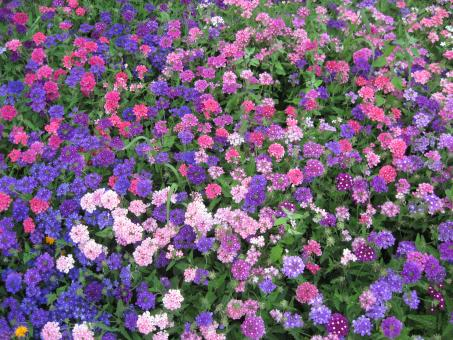 Free Stock Photo of Colorful flower garden