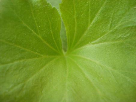 Free Stock Photo of Green leaf texture