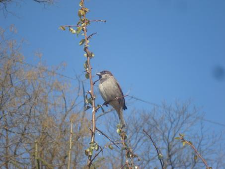 Free Stock Photo of A sparrow on a branch