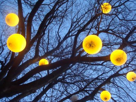 Free Stock Photo of Lamps on a tree
