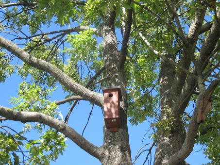 Free Stock Photo of A birdhouse on a tree