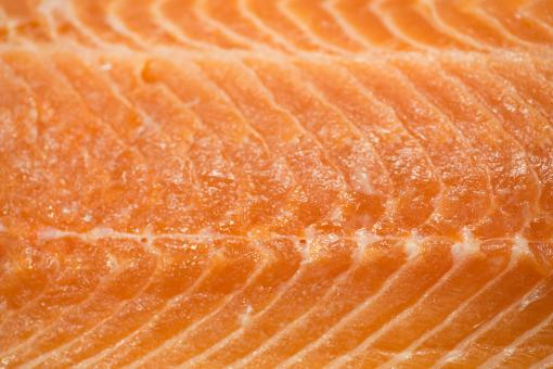 Free Stock Photo of Salmon
