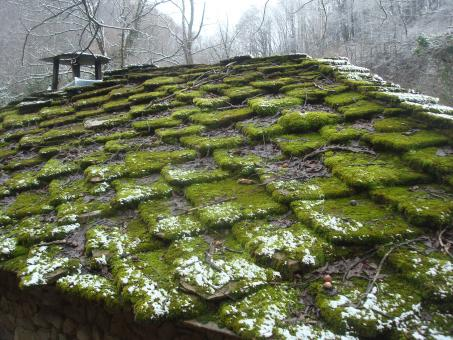 Free Stock Photo of Moss covered rooftop