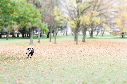 Free Stock Photo of Dog in the park