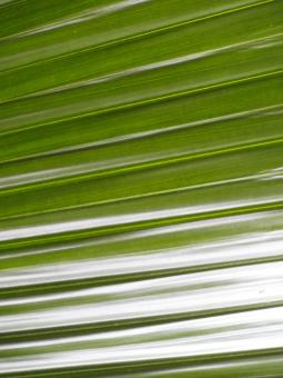 Free Stock Photo of Palm Leaf Background