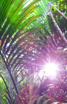 Free Stock Photo of Sunny Jungle