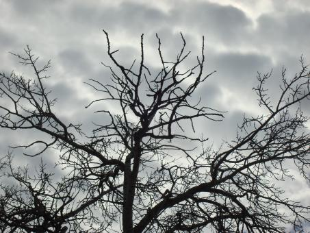 Free Stock Photo of Sinister tree branches