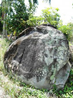 Free Stock Photo of Large Boulder in the Rainforest