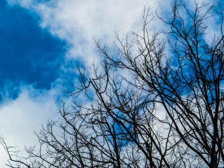 Free Stock Photo of Skies and treetops