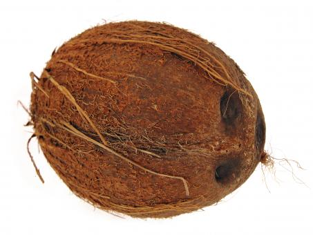 Free Stock Photo of Coconut