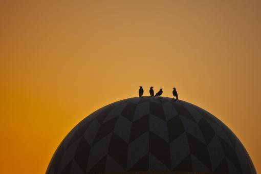 Free Stock Photo of Birds on dome