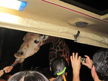 Free Stock Photo of Night safari Chiang Mai