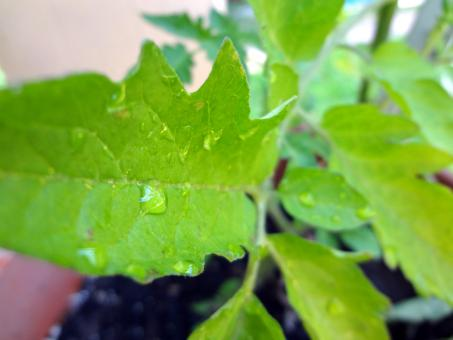 Free Stock Photo of Raindrop leaf