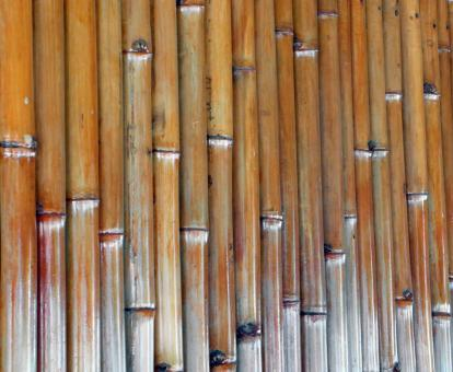 Free Stock Photo of Isolated Bamboo Background