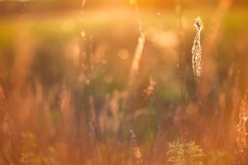 Free Stock Photo of Sunshine field