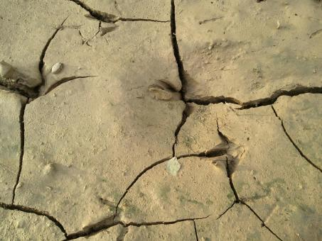 Free Stock Photo of Dry soil