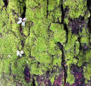 Free Stock Photo of Mossy Bark Background
