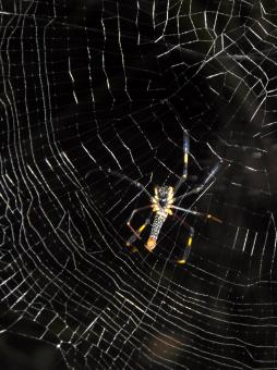 Free Stock Photo of Spider's Web