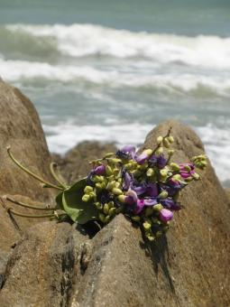 Free Stock Photo of Bouquet on Ocean Rocks