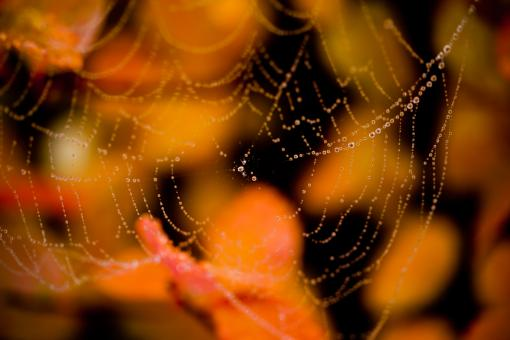 Free Stock Photo of Wet spider web